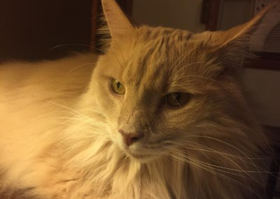 marley cat